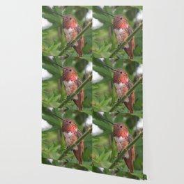 Hummingbird in the Japanese Maple Wallpaper