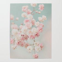Gypsophila pink blush ll Poster