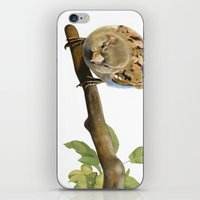 sparrow iPhone & iPod Skins featuring sparrow by Alessandra Razzi Illustrazioni