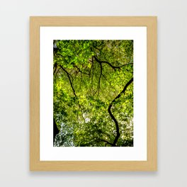 Tree Leafs. Framed Art Print