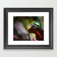 Iridescent Bug (Philippines) Framed Art Print