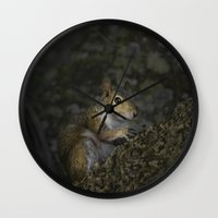 squirrel Wall Clocks featuring Squirrel by Judith Lee Folde Photography & Art