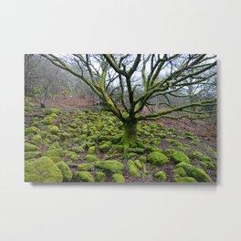 Mossy Green Tree and Rocks Metal Print