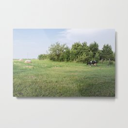 Landscape from a cow, a calf and some hay bales in a meadow Metal Print