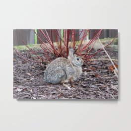 Bunny 5 Metal Print