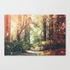 Beautiful California Redwoods Canvas Print