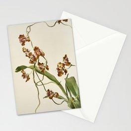 Vintage Orchid Print - Reichenbachia (1894) - Oncidium superbiens Stationery Cards