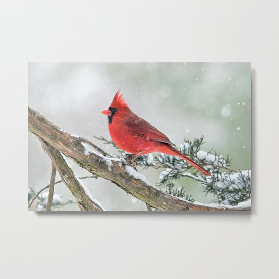 Cardinal Holding Steady in the Storm Metal Print