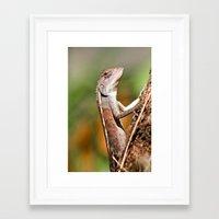 lizard Framed Art Prints featuring lizard by Anja Ergler