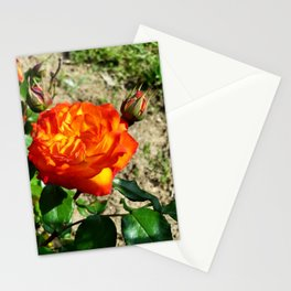 Fiery Rose, 2020 from Roberta Winters Photography Stationery Cards