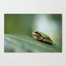 Mediterranean Tree Frog - Hyla meridionalis 8203 Canvas Print
