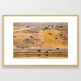 Yellowstone Buffalo Framed Art Print
