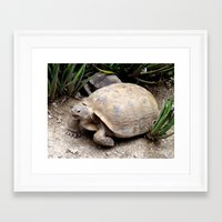 tortoise Framed Art Prints featuring Tortoise by lennyfdzz