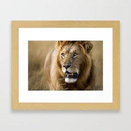 Lion, Masai Mara Framed Art Print