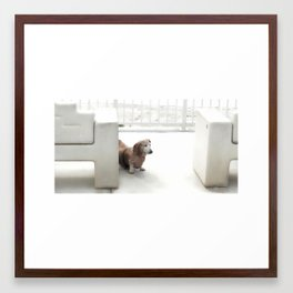 Dachshund, Carlsbad, California Framed Art Print