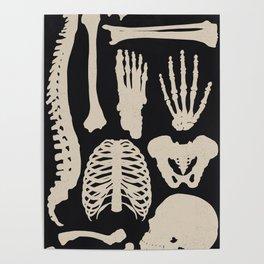 Osteology Poster