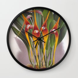 Masdevallia Macura Orange Vintage Long Stemmed Orchids Wall Clock