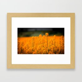 Orange Rapeseed Framed Art Print
