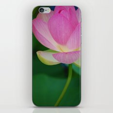 Lotus Blossom Flower 30 iPhone & iPod Skin