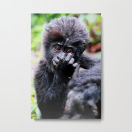Young Mountain Gorilla, Uganda Metal Print