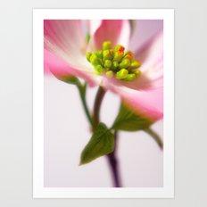 Pink Dogwood Art Print