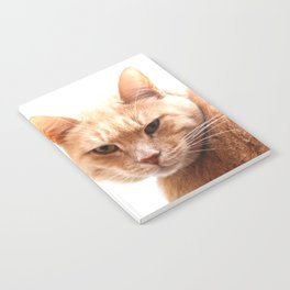 Red cat watching Notebook