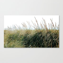 Gooseberry Neck 03 Canvas Print
