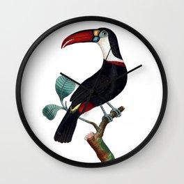 Red-Beaked Toucan Wall Clock