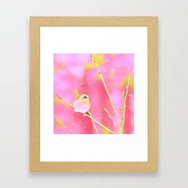 Junco Pink Yellow by CheyAnne Sexton Framed Art Print
