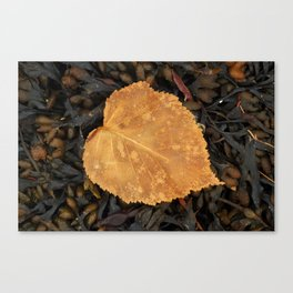 On a bed of sea wrack Canvas Print