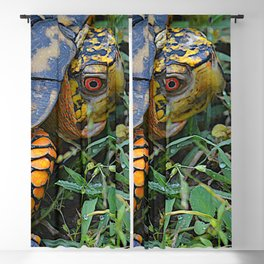 turtle, yellow and orange Blackout Curtain