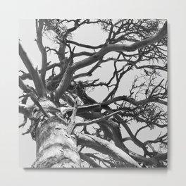 Pinewood Metal Print