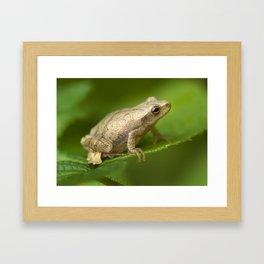 Spring Peeper Framed Art Print
