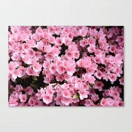 Mini azaleas #floral Canvas Print