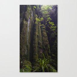 Winchead Cave Entrance II, Charleston, Buller, New Zealand Canvas Print