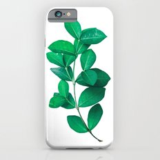 Green Leaves in White background iPhone 6s Slim Case