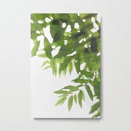 Green Ash Leaves Metal Print