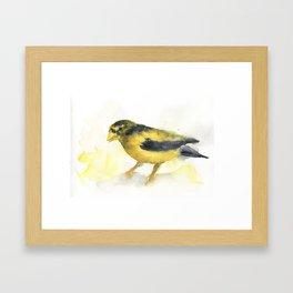 Golden Bird Framed Art Print