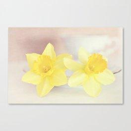 Buttercream Daffs Canvas Print