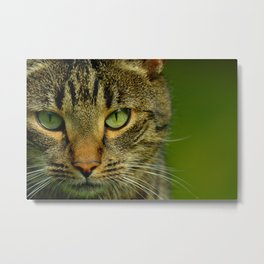 portrait of a cat - #1 Metal Print