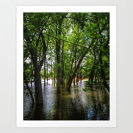 Forest View Art Print