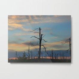 089 | bastrop state park Metal Print