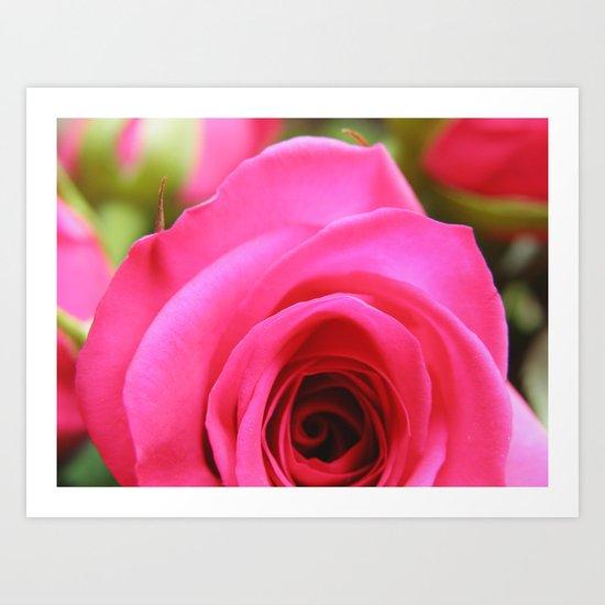 Pink Roses #4 Art Print
