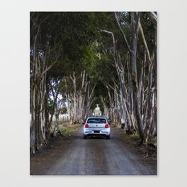 Tree Lined Driveway - Toolern Vale Canvas Print