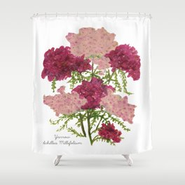 Yarrow: Achillea Millefolium Shower Curtain