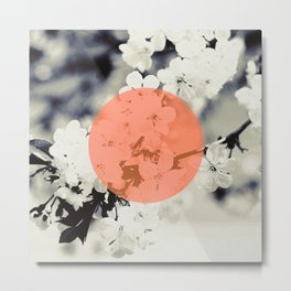 Sakura B4 Metal Print
