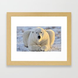 Majestic Giant Adult Polar Ice Bear Sitting On Cold Ground Close Up Ultra HD Framed Art Print
