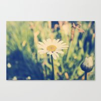 rileigh smirl Canvas Prints featuring Daisy by Rileigh Smirl