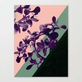 Jade there Canvas Print