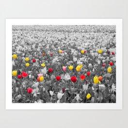 Burst of Color Art Print